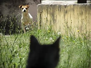 cat and dog looking nervous