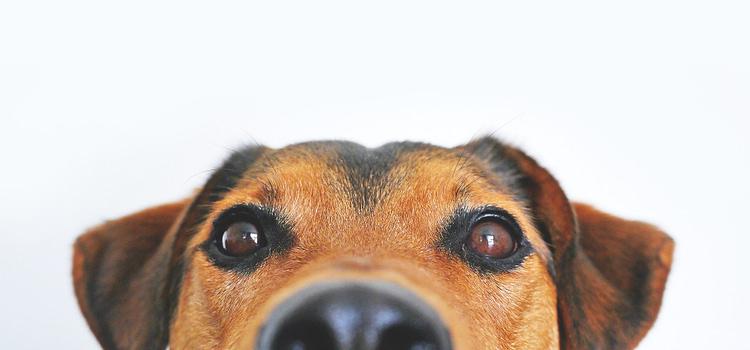 dog looking cute