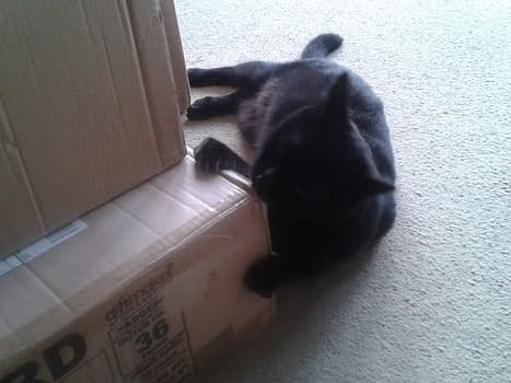 Cat helping to pack Dernier books!