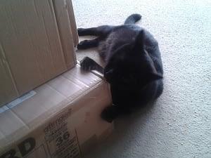 Cat helping to pack Dernier books!